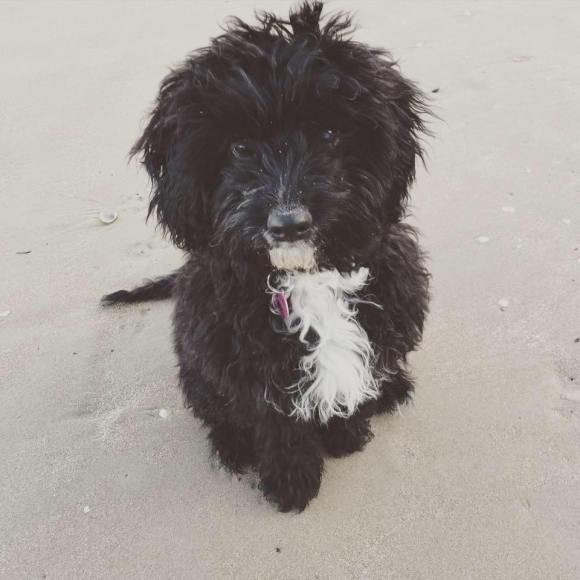 mabel-at-the-beach
